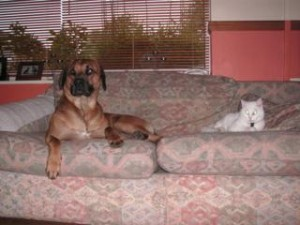 This is my half of the sofa