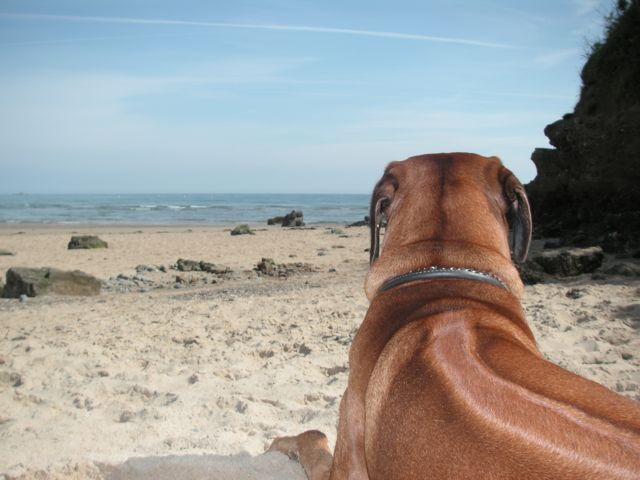 Louis staring out to sea