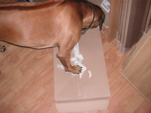 Louis trying to unpack a cupboard door; luckily the door's already out and he doesn't know it.