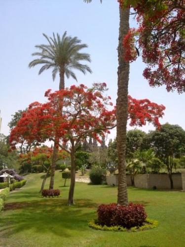 Cairo 2010