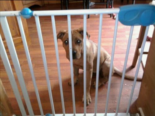 Codee behind bars