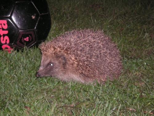 Spike the hedgehog