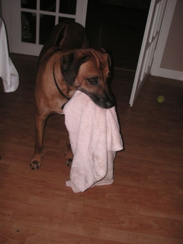 louis_the_towel_thief