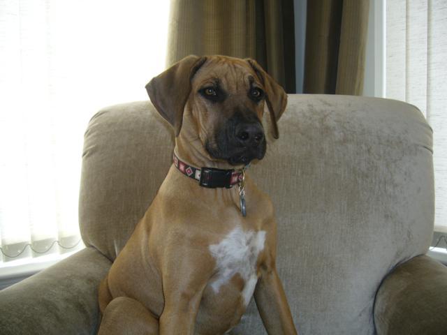 Ari On His Sofa