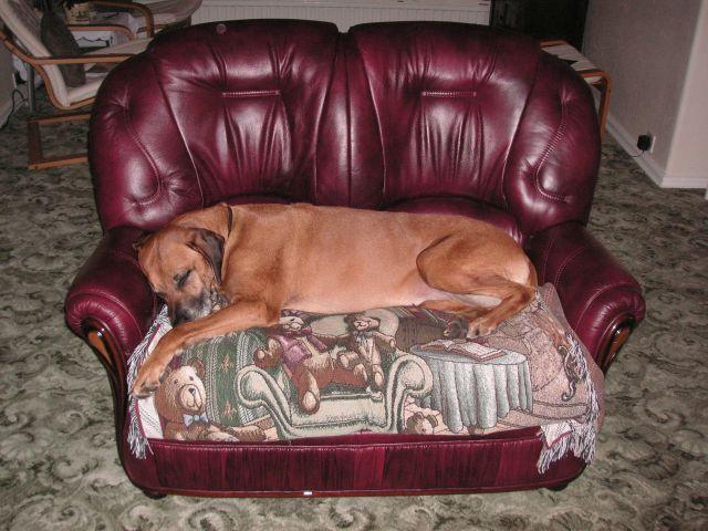 Leather Sofa Louis