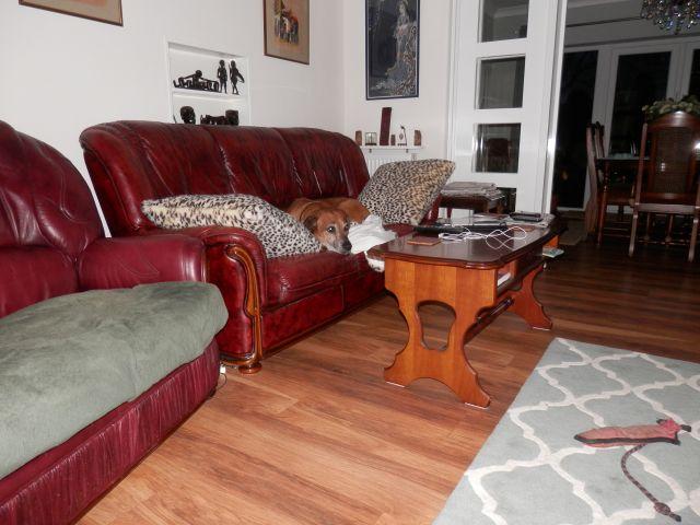 Sofa Stealing Hound